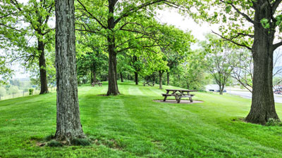 picnic table on the grass amongst some trees